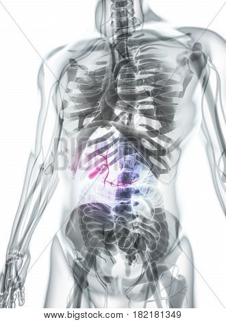 3D Illustration Of Male Gallbladder.