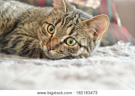 Cautious Cat On Carpet
