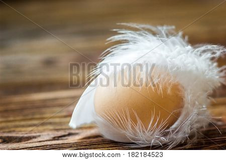 Beautiful brown egg of a guinea fowl with white feathers on wooden background can be used for easter concept greeting card