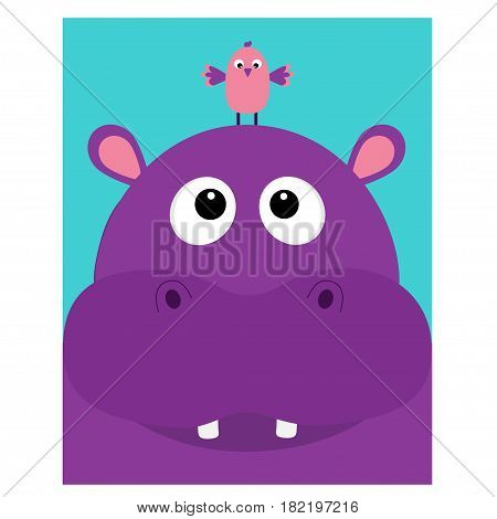 Hippopotamus head facelooking up to bird. Cute cartoon character hippo with tooth. Violet behemoth river-horse icon. Baby animal collection. Education card for kids. Flat design Blue background Vector