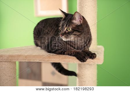 Cute cat sitting on tree in modern room, closeup