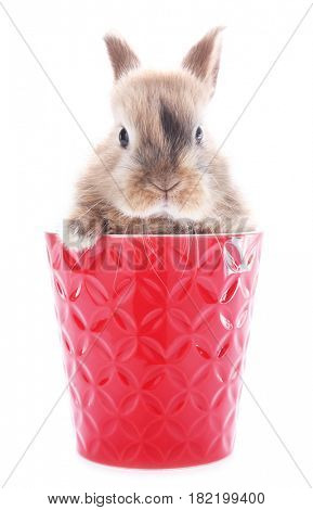 Cute bunny rabbit in red flowerpot