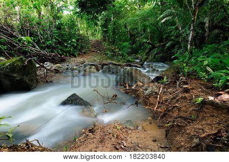 Panama wild Darien jungle near Colombia border. Central America