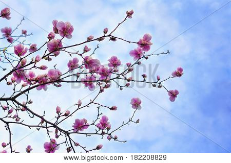 Flowering branch of peach on a background of blue sky