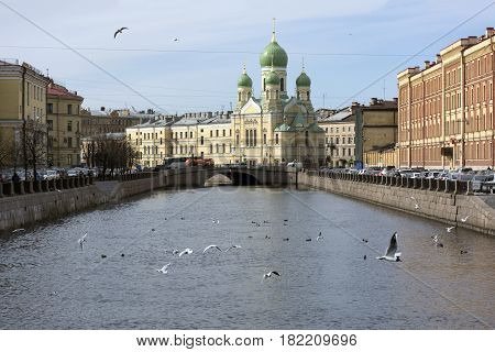 Isidorovskaya Orthodox Church on the Bank of the Griboyedov canal buildings dome flock of seagulls the birds fly the bridge in the distance cars