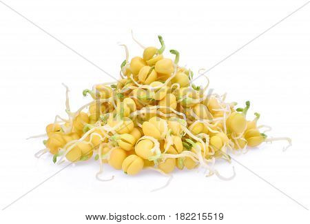 snow pea sprouts isolated on white background