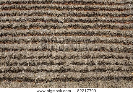 Texture of thatched roof of old peasant's house