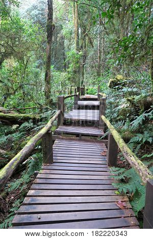 small footpath made from wood going through the forest Thailand