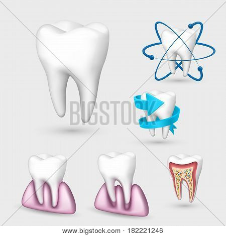 3d tooth collection. Set Tooth . Vector illustration