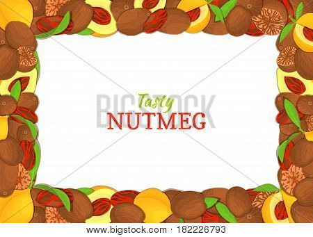 Rectangle horizontal frame composed of delicious nutmeg. Vector card illustration. Nuts spice frame, nutmeg fruit in the shell, whole, shelled, leaves, for packaging design of healthy food
