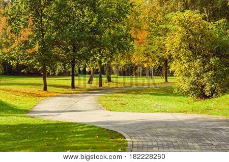 Beautiful trees in autumn colors. The path in the park is far away.