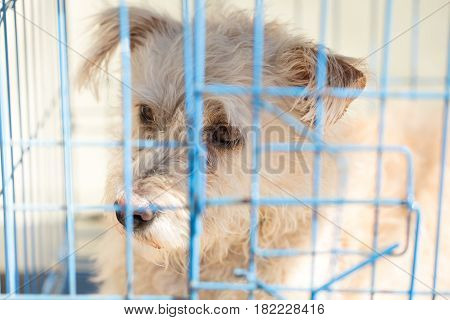 closeup pitiable dog in the cage no freedom pet