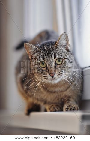 Striped green-eyed cat on a window sill.