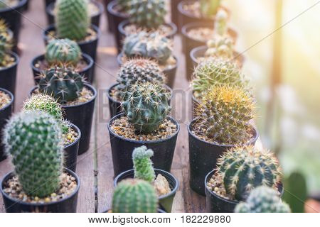 Small Home Gardening In Holiday, Mini Cactus Plant In Pot Garden Home Decoration