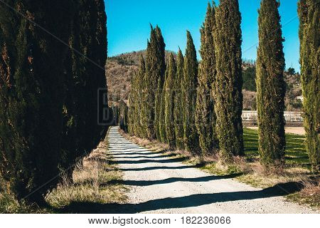 Italy. Tuscany. Green fields with cypress trees under a blue sky