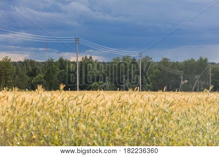 Landscape with rye ripe field, dramatic sky and electricity transmission line
