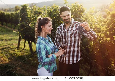 Romantic young couple in vineyard before harvesting