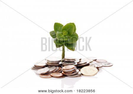 Árbol joven de pila de monedas
