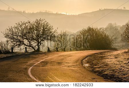 trees by the road uphill in rural area. beautiful springtime sunrise in mountains