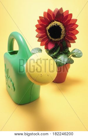 Sunflower Plant and Watering Can on Yellow Background