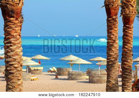 tropical beach in Egypt between palm trees