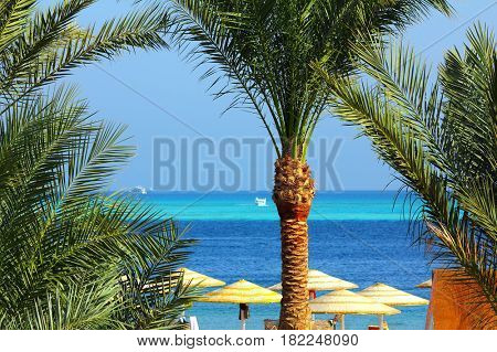 palm trees and tropical beach in Egypt