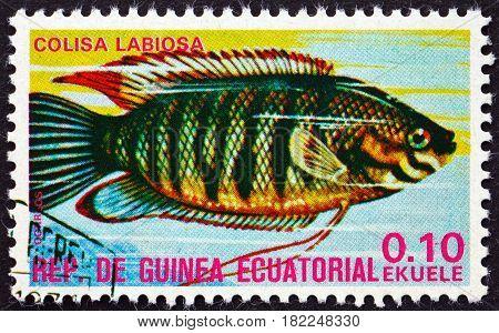 EQUATORIAL GUINEA - CIRCA 1975: a stamp printed in Equatorial Guinea shows Thick-lipped Gourami Colisa Labiosa Tropical Fish circa 1975