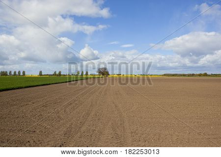 Plowed Field In Springtime With Wheat