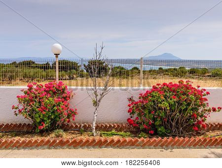 An observation deck with beautiful flowers on the island of Kos, Dodecanese, Greece