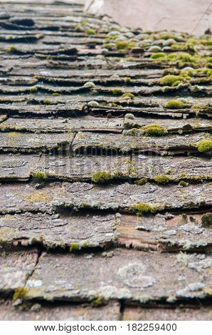 Run Down Building With Broken Roof And Growing Moss