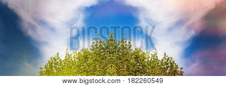 Low angle view of cloud in the sky and part of a tree with lush foliage