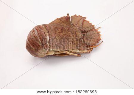 slipper lobster on the white background