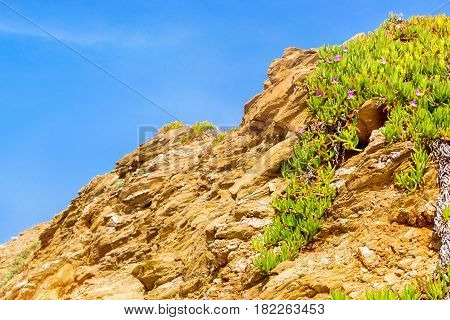 Tropical green Alpine plant with bright purple flowers growing on a rock in the resort village Bali Crete island Greece Beach Evita