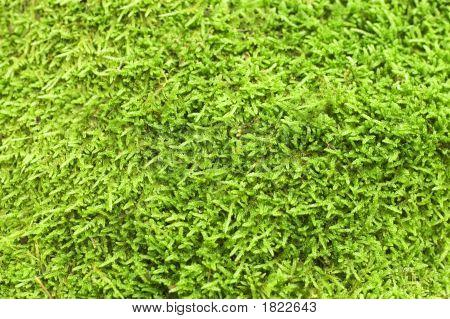 Green Moss Backgound