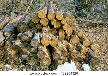 A pile of cut pine dry trees in the courtyard