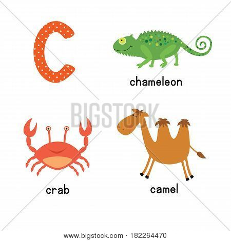 Cute children zoo alphabet C letter tracing of funny animal cartoon for kids learning English vocabulary. camel crab chameleon