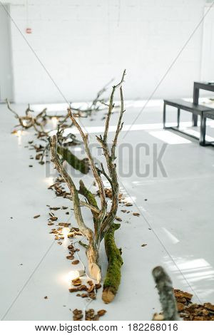 Wedding decor. The decor of wood on the floor. The tree on the floor. The bark on the white floor. Decor in eco-style . The wood and bark on a white floor.