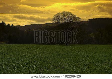 Landschaft; Kammerhof; Pielachtal; März Wald; Wiese; Jahreszeit; Frühjahr Landscape; Kammerhof; Pielachvalley; Forrest; Meadow; Season; Spring