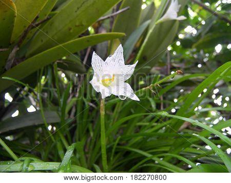 flor con gotas de agua en día lluvioso