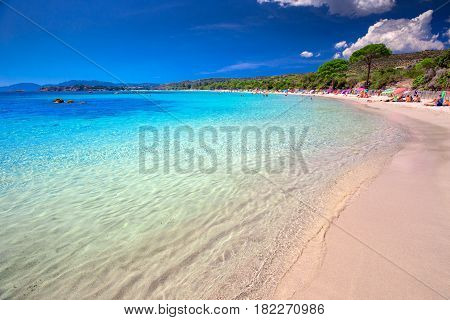 Sandy Beach With Pine Trees On Corsica Island, France, Europe.