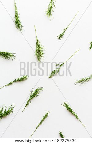 white background filled with Ears of a green cereal pattern. Top view. Flat lay. Concept of healthy lifestile, organic food, freshness and spring mood. minimalistic picture of the ripening harvest.