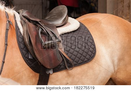 Close Up Of Saddle On Horseback, Horse In Stable