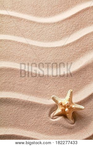 Star fish or sea star in the rippled beach sand. Texture background with starfish.