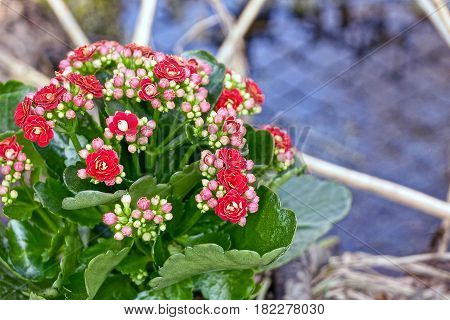 A bouquet of small red flowers near the water