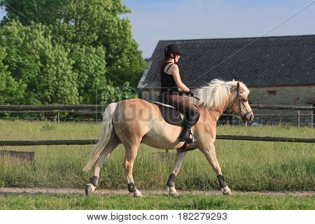 A Young Woman Riding A Horse Haflinger
