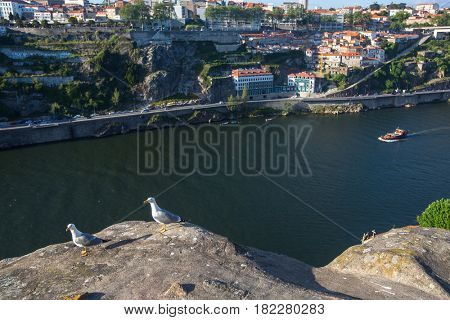 Seagulls sitting on the rocks above Douro river, Porto, Portugal.