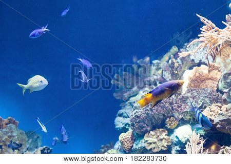many Fish on the coral reef