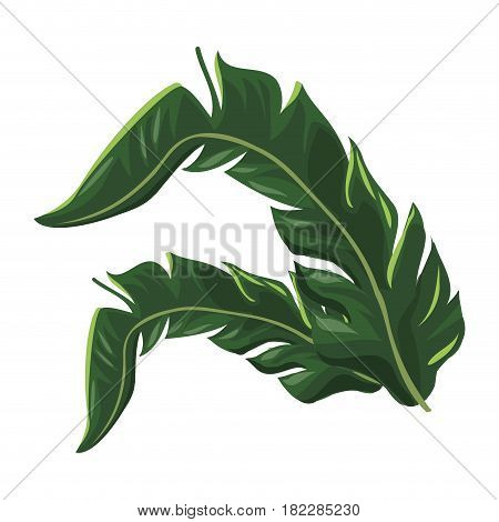 tropical leave palm tree image vector illustration eps 10