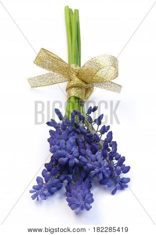 A small bouquet fragrant blue hyacinths on a white background