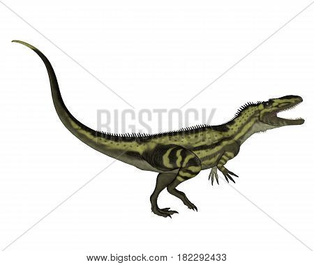 Torvosaurus dinosaurs roaring isolated in white - 3D render